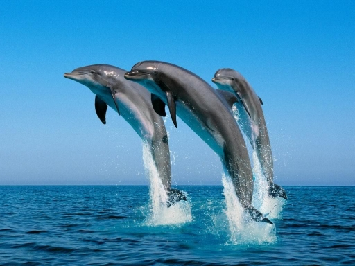 I delfini - sinonimo di mare pulito